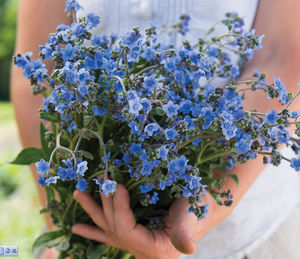 annual floral plants