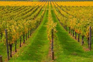 vegetation cover mixture / soil structure / nitrogen restoration / biological