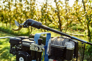 manual pruning shears / pneumatic / telescopic / vineyard