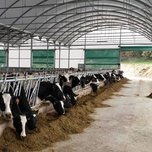 modular barn / for cattle / dairy cattle / steel frame