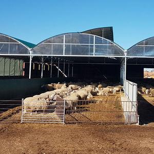 modular barn / for sheep / steel frame
