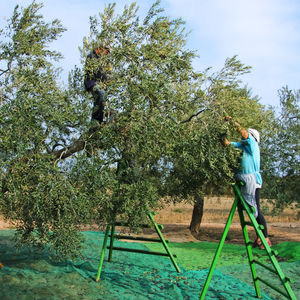 harvesting net / polyethylene / for arboriculture