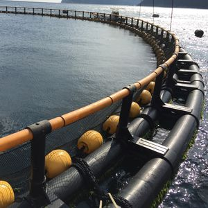 aquaculture floating dock