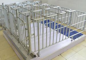 slatted floor gestation stall