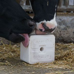 cattle lick block