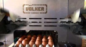 egg packing machine / automatic / with conveyor