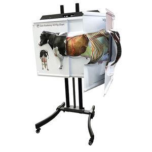 anatomy veterinary simulator / for teaching / cows / education