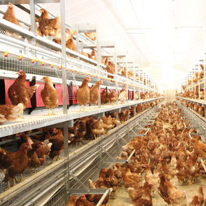 chicken aviary system