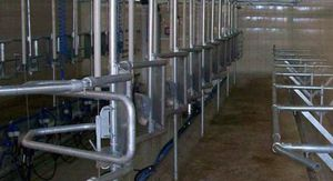 cow milking parlor