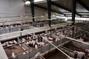 pig barn ventilation system