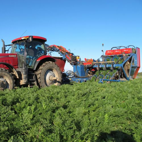 carrot harvester / trailed / 3-row