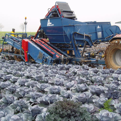 cabbage harvester / trailed / 2-row