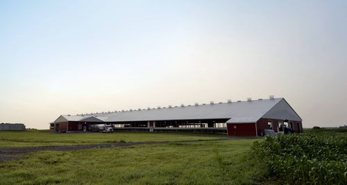 modular barn / dairy cattle