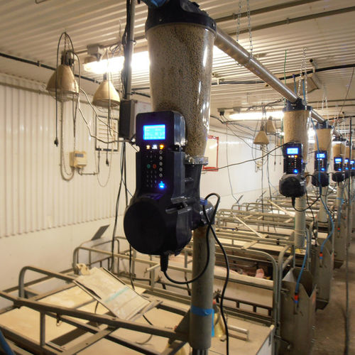 feed dispenser / gravimetric / for pigs / solid feed