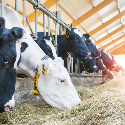 cow management system / animal activity / mobile