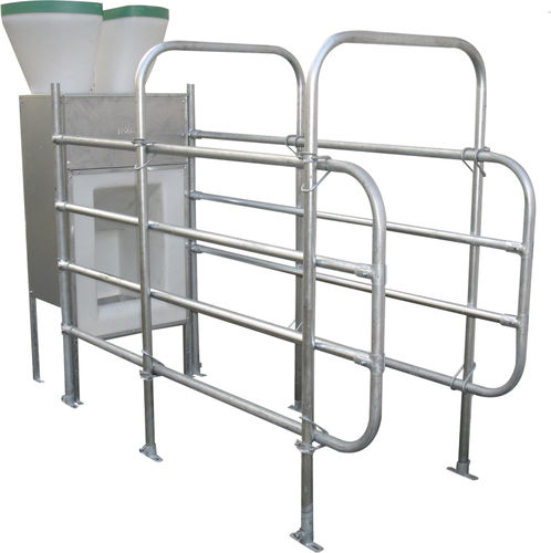 milking cow feed station