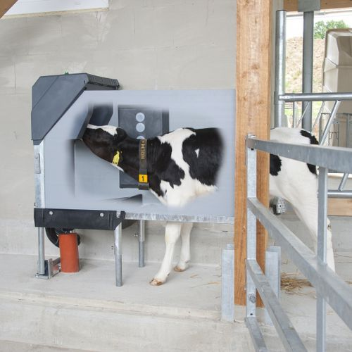 calf hopper feeder / stainless steel / automatic / programmable