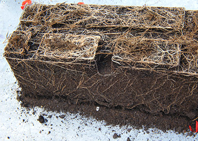 potting soil growing medium