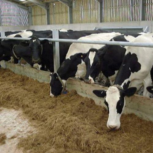 cows feeder panel