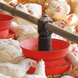 chicken feeder / plastic / multi-access