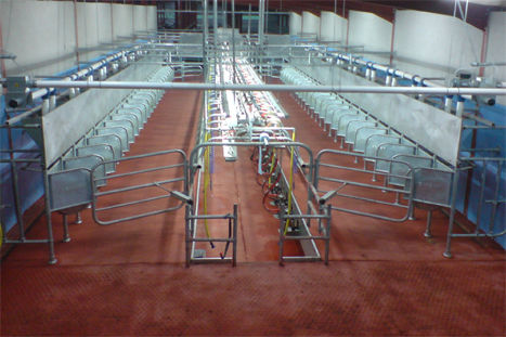 cow milking parlour / herringbone / automatic entrance and exit gate