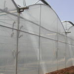 multi span greenhouse / commercial production / plastic / with gutter