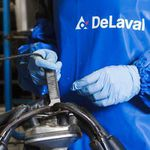 milking gloves / nitrile / powder-free