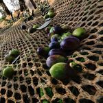 olive harvesting net / HDPE / for crops