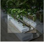 coco peat growing medium