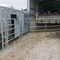 cow sorting gate