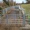 cows livestock crush