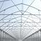 multi span greenhouse