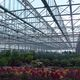 multi span greenhouse / commercial production / glass / with gutter