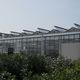 multi span greenhouse / commercial production / glass / PVC