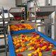 fruit conveyor / belt