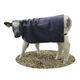 calf blanket / goat