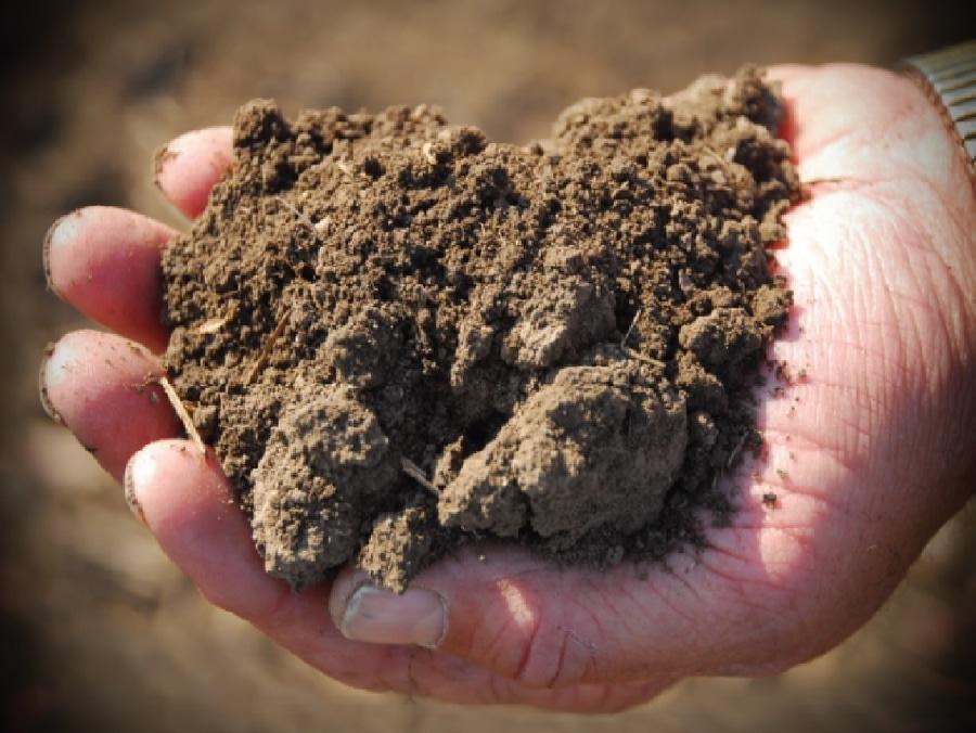 Qué rotaciones dan el alza más grande de la salud del suelo? - United States