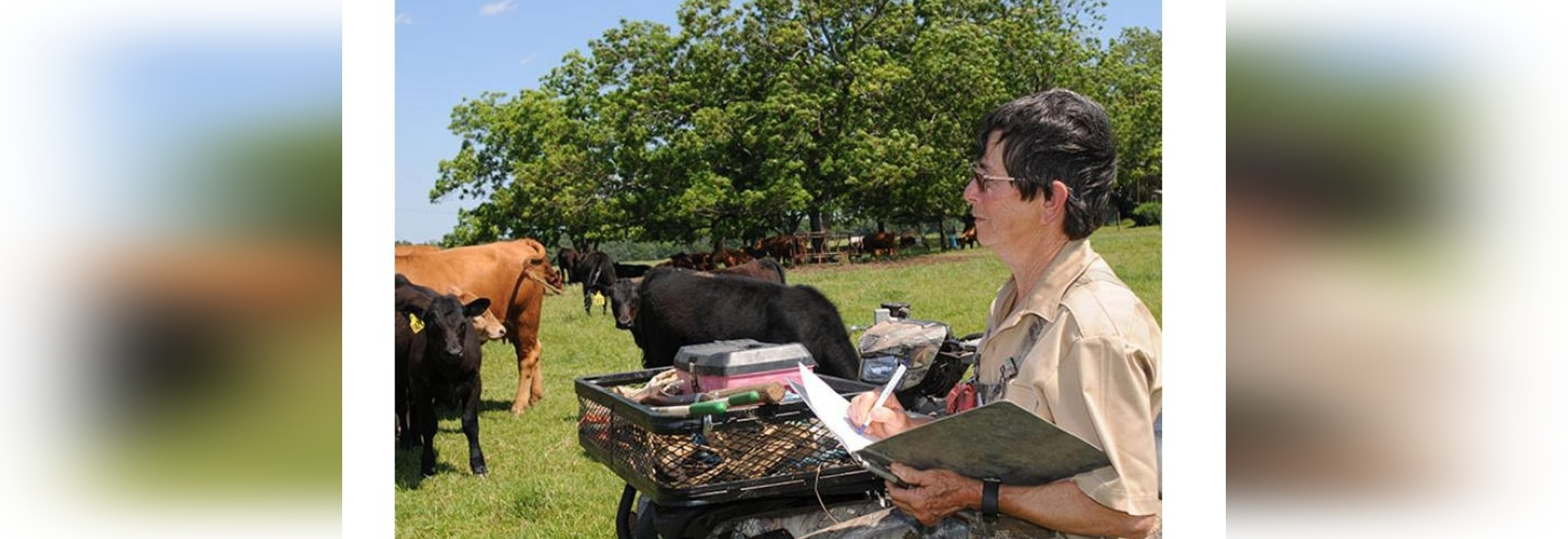 Cattlewoman Willyne McGill stresses the importance of economics when considering carrying an unbred cow over. (DTN/Progressive Farmer photo by Becky Mills)
