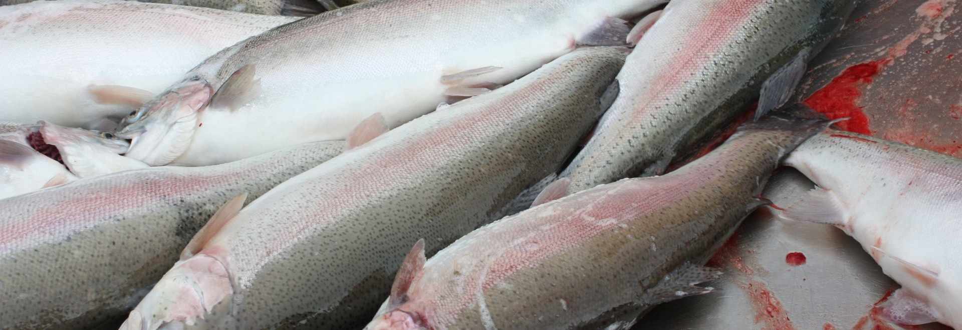 Denamrk is the 8th largest aquaculture producer in the UK, with a sector that is dominated by rainbow trout production