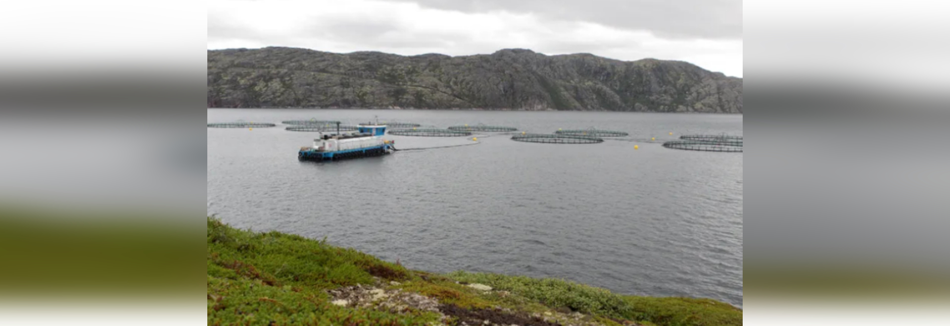 Russian Aquaculture currently owns licences for 34 salmon and rainbow trout sites, with - they say - the potential production volume of 50,000 tonnes per annum
