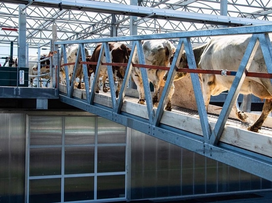 world's first floating farm welcomes cows in rotterdam