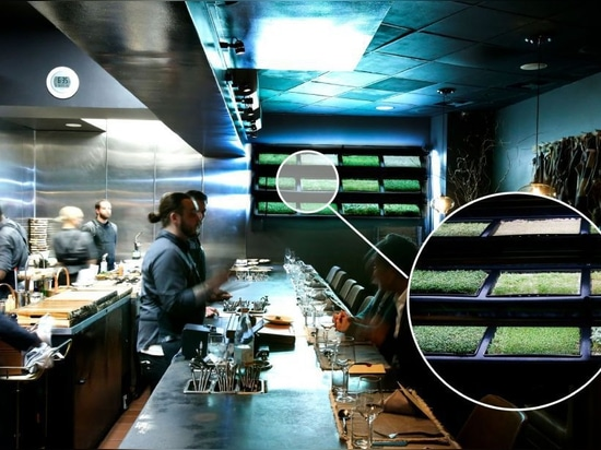 Custom urban farm installation for Scratch|Bar and Kitchen, a Los Angeles-based fine-dining restaurant.