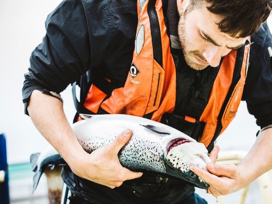 Gill health is a priority issue in Scotland and other salmon farming countries. Photo: SSF.