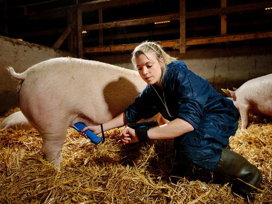 Duo-Scan:Go swine scanner
