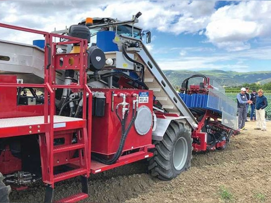 Church Brothers Farms in California changed its planting configurations and spacing to accommodate the width of the automated broccoli harvester.