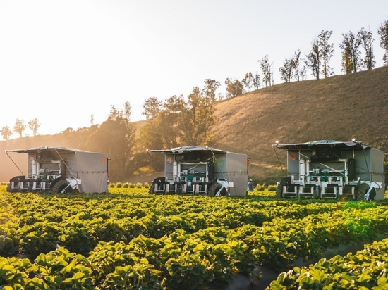 Advanced Farm's robotic strawberry harvester uses soft grippers and tractor-mounted cameras that are able to determine the ripeness of berries and safely harvest them without damaging the fruit.