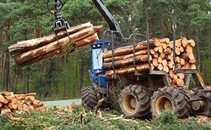 Sfruttamento forestale