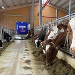 robot di alimentazione per bovini / semovente