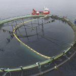 rete per acquacoltura per calibratura dei pesci
