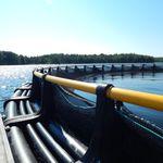 gabbia per pesci flottante / in plastica / tondo